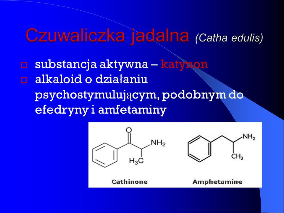  substancja aktywna – katynon  alkaloid o dzia ł aniu psychostymuluj ą cym, podobnym do efedryny i amfetaminy