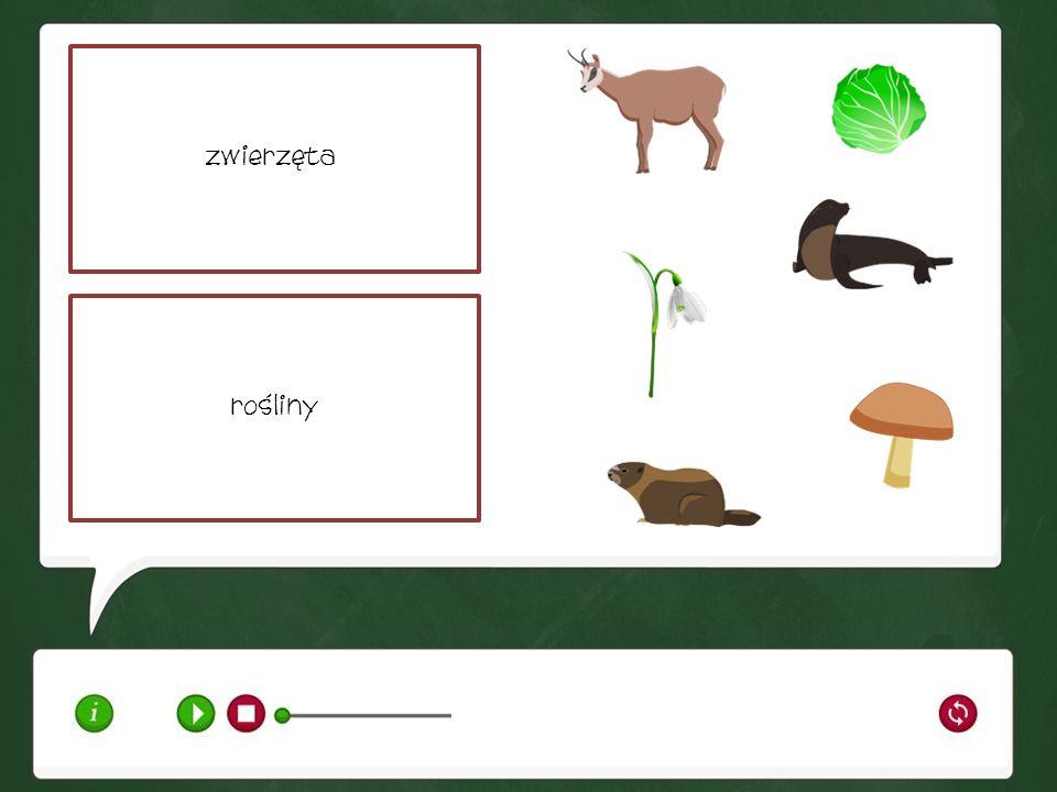 zwierzętarośliny