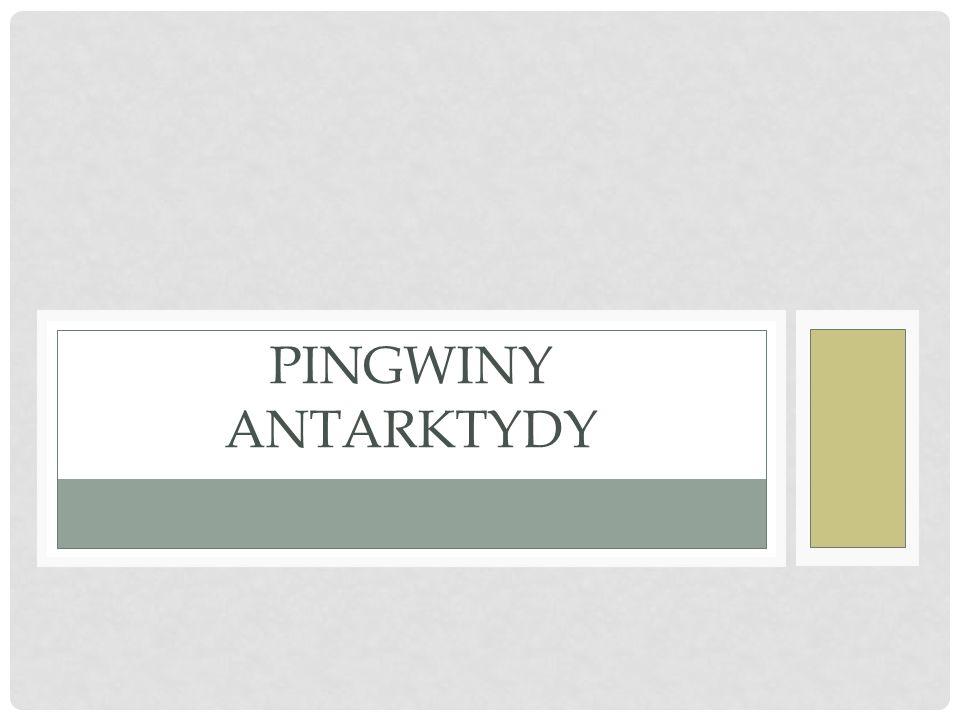 PINGWINY ANTARKTYDY