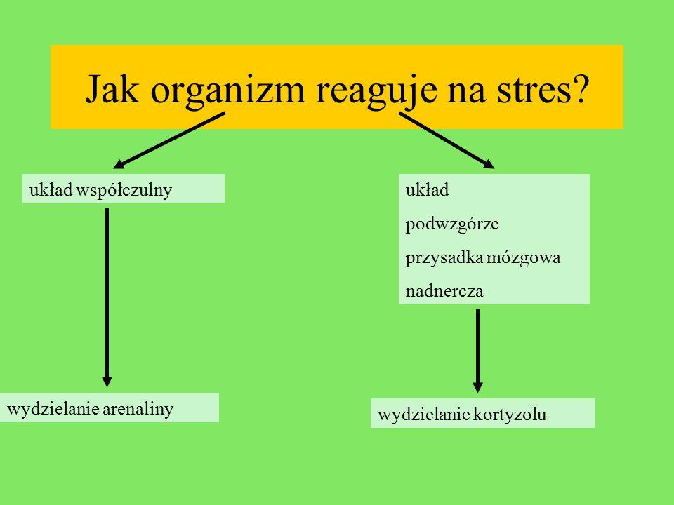PRÓBA BADAWCZA: W ankiecie wzięli udział uczniowie i nauczyciele I LO w Gorzowie Wlkp.