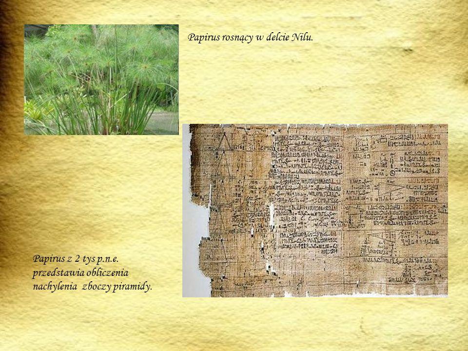 Papirus rosnący w delcie Nilu.Papirus z 2 tys p.n.e.