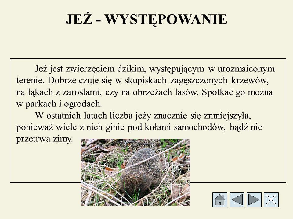 WYKAZ ŹRÓDEŁ 1.Dobrowolsaka H., Wesoła Szkoła, Warszawa 2000, WSiP 2.