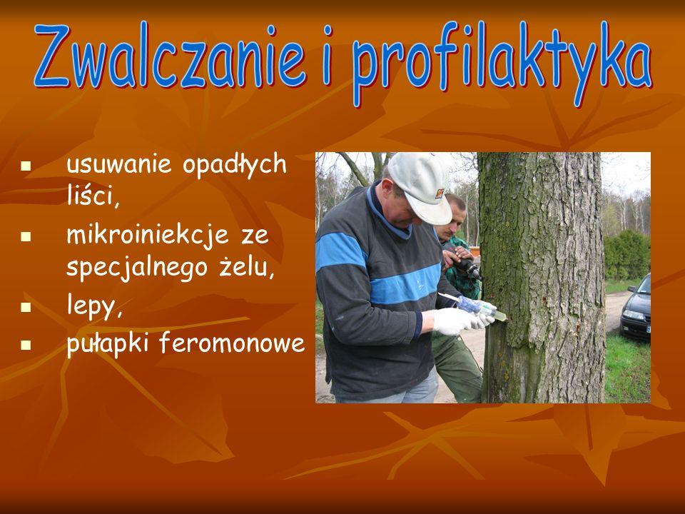 usuwanie opadłych liści, mikroiniekcje ze specjalnego żelu, lepy, pułapki feromonowe