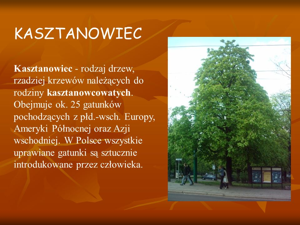 Kasztanowiec - rodzaj drzew, rzadziej krzewów należących do rodziny kasztanowcowatych.
