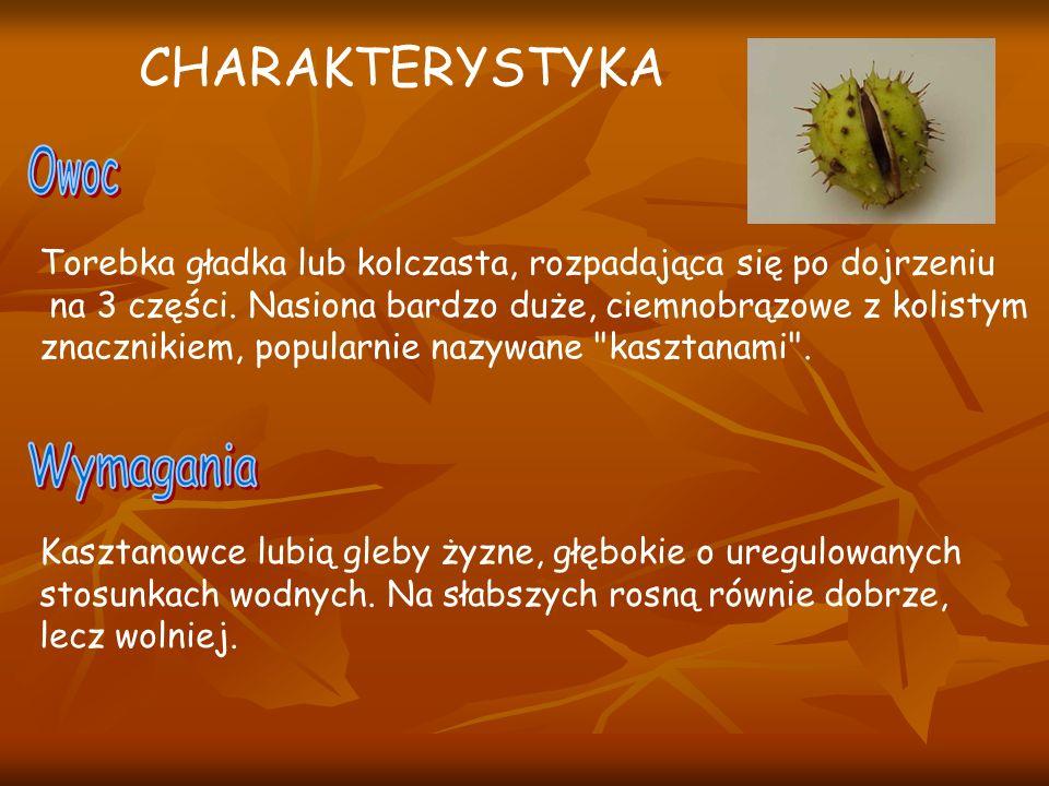 - Poczwarki zimują w opadłych liściach - Dorosłe osobniki pojawiają się pod koniec IV.