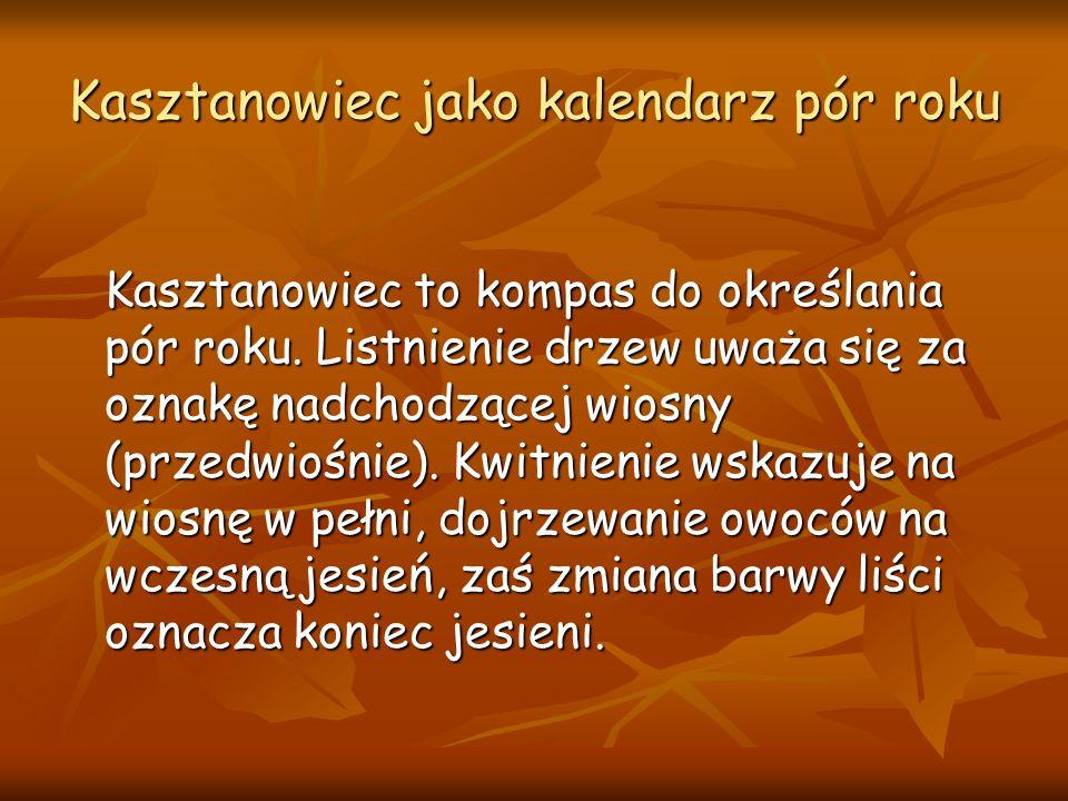 Kasztanowiec jako kalendarz pór roku Kasztanowiec to kompas do określania pór roku.