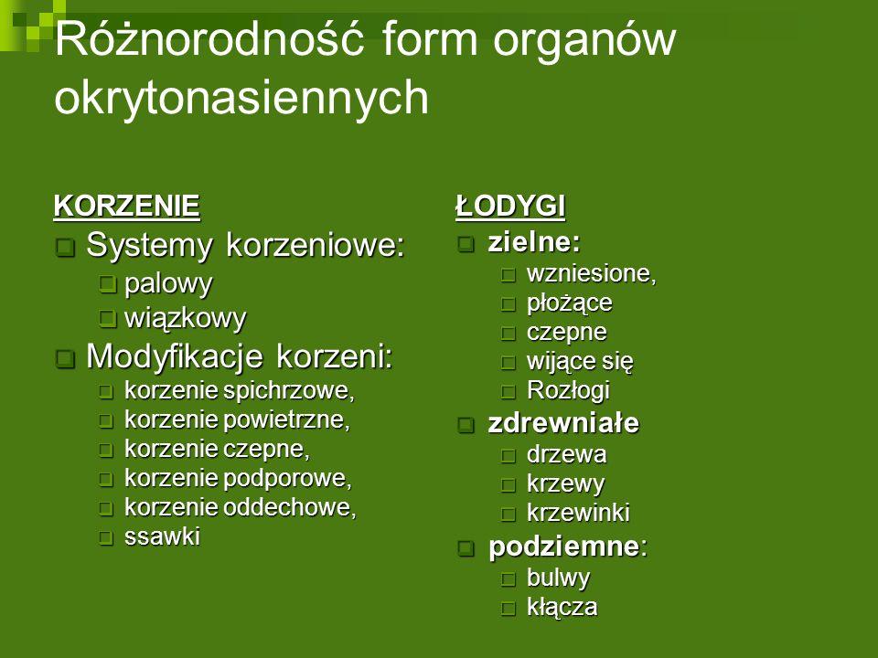 Różnorodność form organów okrytonasiennychKORZENIE  Systemy korzeniowe:  palowy  wiązkowy  Modyfikacje korzeni:  korzenie spichrzowe,  korzenie powietrzne,  korzenie czepne,  korzenie podporowe,  korzenie oddechowe,  ssawki ŁODYGI  zielne:  wzniesione,  płożące  czepne  wijące się  Rozłogi  zdrewniałe  drzewa  krzewy  krzewinki  podziemne:  bulwy  kłącza