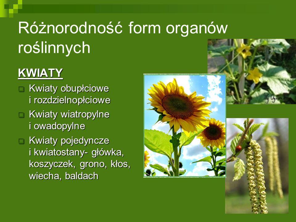 Różnorodność form organów roślinnych KWIATY  Kwiaty obupłciowe i rozdzielnopłciowe  Kwiaty wiatropylne i owadopylne  Kwiaty pojedyncze i kwiatostany- główka, koszyczek, grono, kłos, wiecha, baldach