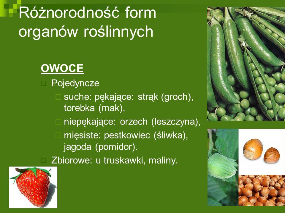 Różnorodność form organów roślinnych OWOCE  Pojedyncze  suche: pękające: strąk (groch), torebka (mak),  niepękające: orzech (leszczyna),  mięsiste