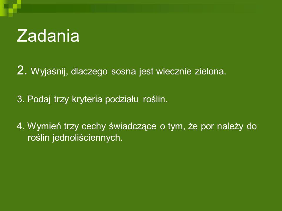 Zadania 2.Wyjaśnij, dlaczego sosna jest wiecznie zielona.
