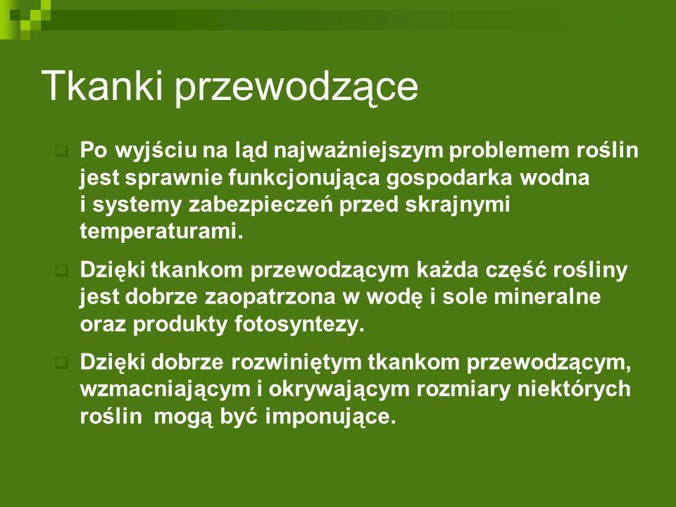 Różnorodność form organów roślinnych OWOCE  Pojedyncze  suche: pękające: strąk (groch), torebka (mak),  niepękające: orzech (leszczyna),  mięsiste: pestkowiec (śliwka), jagoda (pomidor).