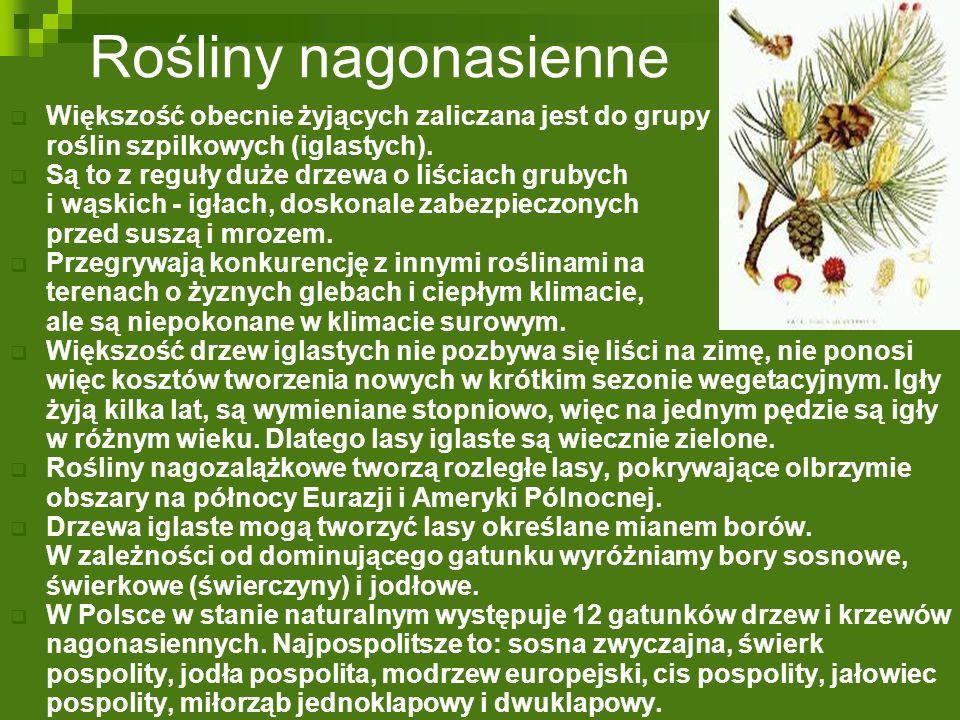 Przegląd roślin nagonasiennych  Sosna zwyczajna jest zdecydowanie najliczniej występującym w Polsce drzewem; stanowi ona aż około 70% drzewostanu polskich lasów.