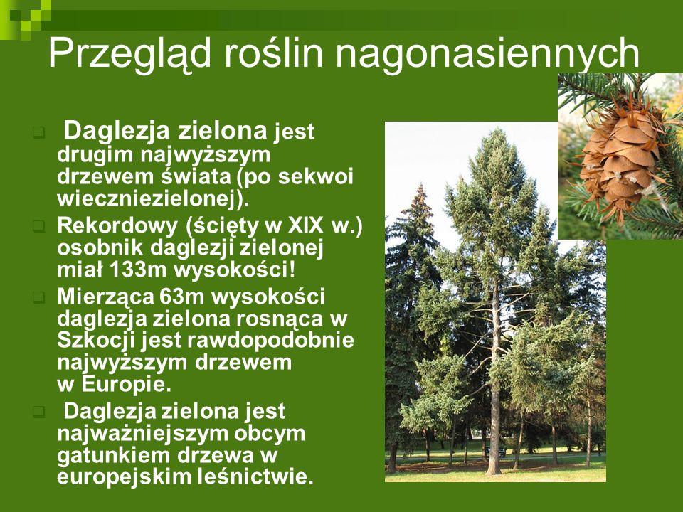Przegląd roślin nagonasiennych  Daglezja zielona jest drugim najwyższym drzewem świata (po sekwoi wieczniezielonej).  Rekordowy (ścięty w XIX w.) os
