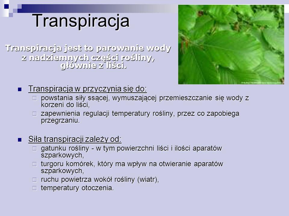 Transpiracja Transpiracja w przyczynia się do: Transpiracja w przyczynia się do:  powstania siły ssącej, wymuszającej przemieszczanie się wody z korz
