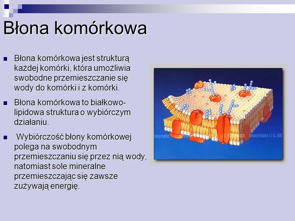 Błona komórkowa Błona komórkowa jest strukturą każdej komórki, która umożliwia swobodne przemieszczanie się wody do komórki i z komórki. Błona komórko