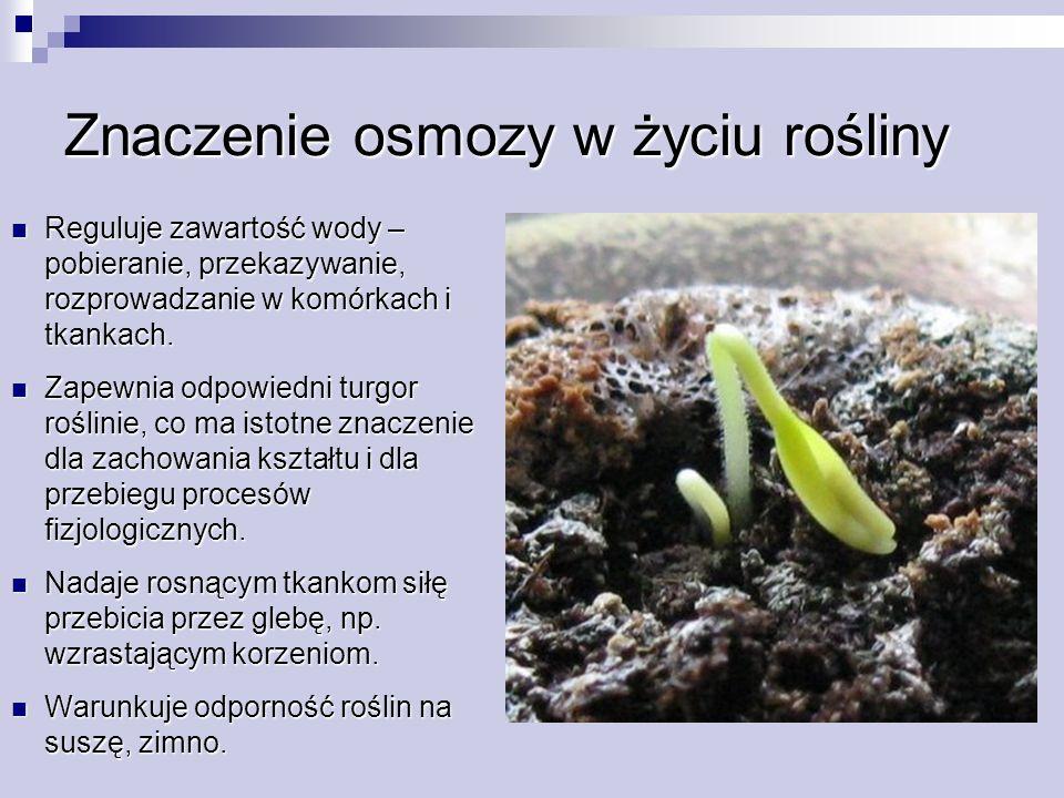 Znaczenie osmozy w życiu rośliny Reguluje zawartość wody – pobieranie, przekazywanie, rozprowadzanie w komórkach i tkankach. Reguluje zawartość wody –