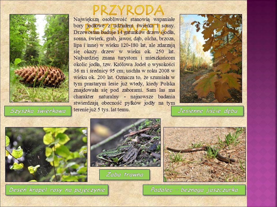 Największą osobliwość stanowią wspaniałe bory jodłowe z udziałem świerka i sosny. Drzewostan buduje 14 gatunków drzew (jodła, sosna, świerk, grab, jaw