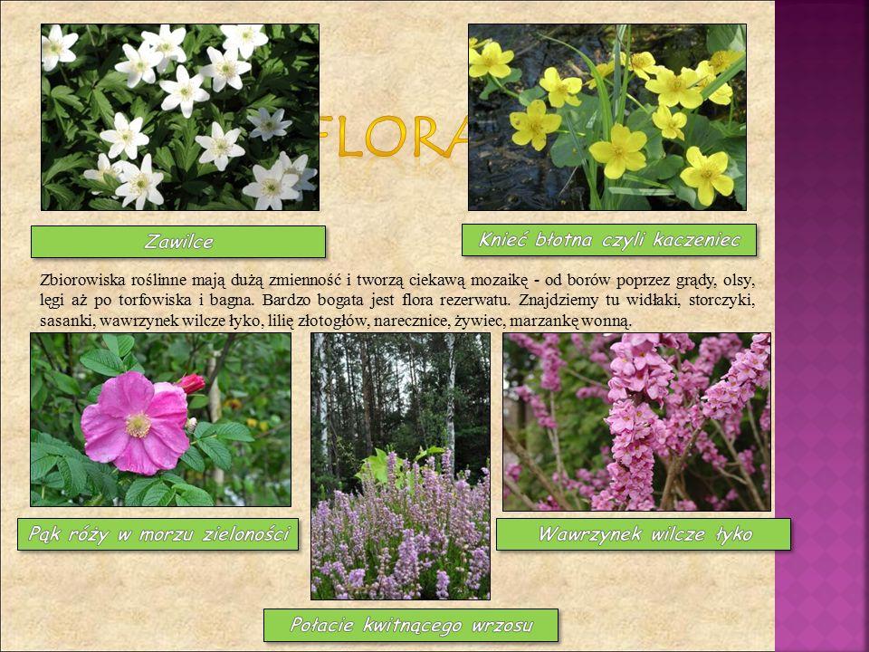 Zbiorowiska roślinne mają dużą zmienność i tworzą ciekawą mozaikę - od borów poprzez grądy, olsy, lęgi aż po torfowiska i bagna.