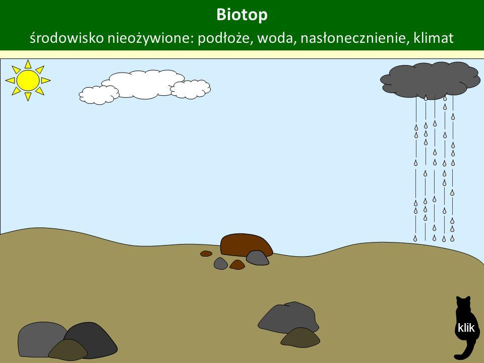 Biotop środowisko nieożywione: podłoże, woda, nasłonecznienie, klimat klik