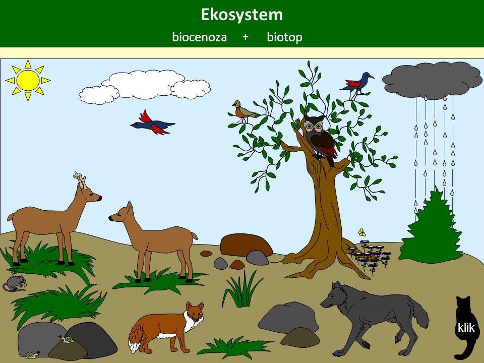 Ekosystem biocenozabiotop + klik