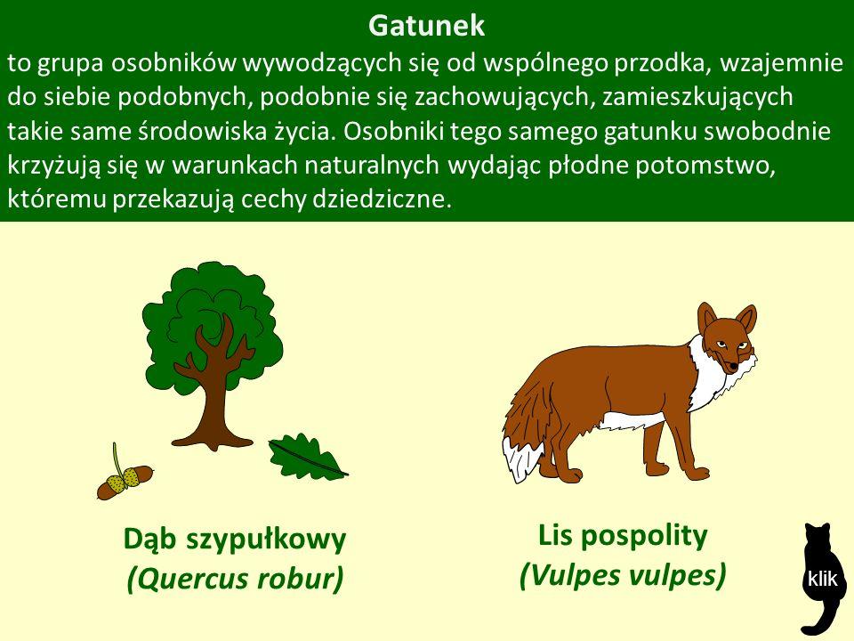 Gatunek to grupa osobników wywodzących się od wspólnego przodka, wzajemnie do siebie podobnych, podobnie się zachowujących, zamieszkujących takie same środowiska życia.