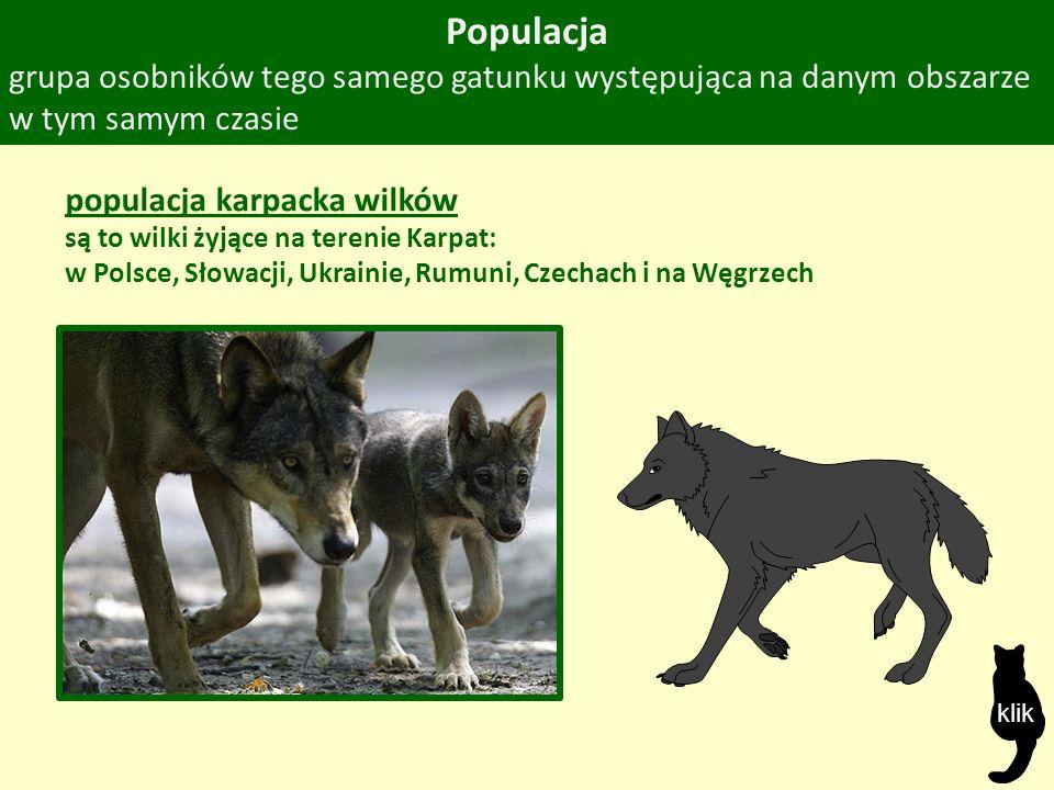 Populacja grupa osobników tego samego gatunku występująca na danym obszarze w tym samym czasie populacja karpacka wilków są to wilki żyjące na terenie Karpat: w Polsce, Słowacji, Ukrainie, Rumuni, Czechach i na Węgrzech klik
