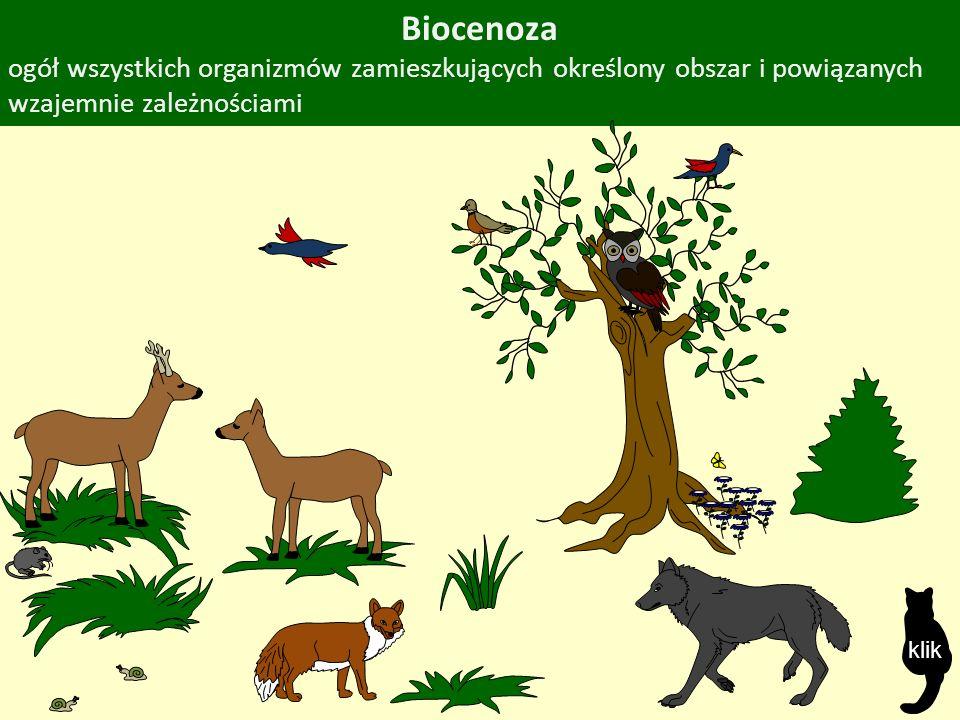 Biocenoza ogół wszystkich organizmów zamieszkujących określony obszar i powiązanych wzajemnie zależnościami klik