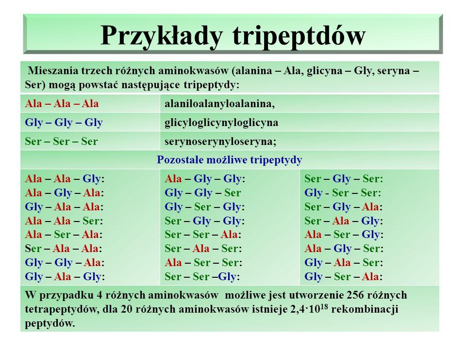 Przykłady – dipeptydów cd O H O // \ // 3.