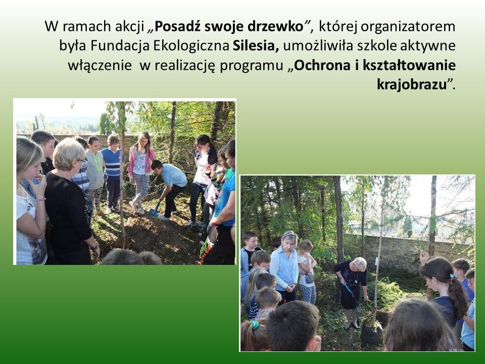 """W ramach akcji """"Posadź swoje drzewko , której organizatorem była Fundacja Ekologiczna Silesia, umożliwiła szkole aktywne włączenie w realizację programu """"Ochrona i kształtowanie krajobrazu ."""
