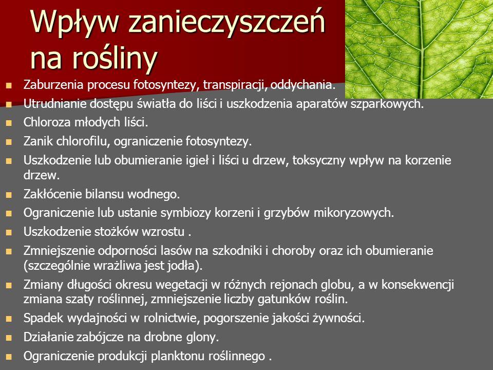 Wpływ zanieczyszczeń na rośliny Zaburzenia procesu fotosyntezy, transpiracji, oddychania. Utrudnianie dostępu światła do liści i uszkodzenia aparatów