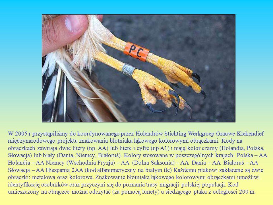 W 2005 r przystąpiliśmy do koordynowanego przez Holendrów Stichting Werkgroep Grauwe Kiekendief międzynarodowego projektu znakowania błotniaka łąkowego kolorowymi obrączkami.