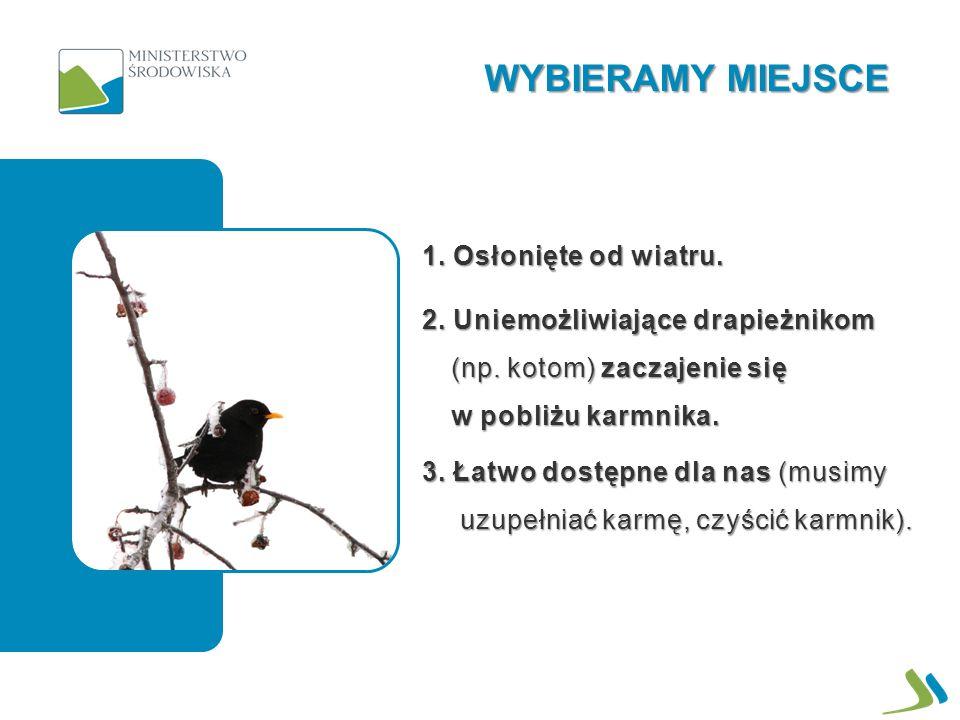 1. Osłonięte od wiatru. 2. Uniemożliwiające drapieżnikom (np. kotom) zaczajenie się w pobliżu karmnika. 3. Łatwo dostępne dla nas (musimy uzupełniać k