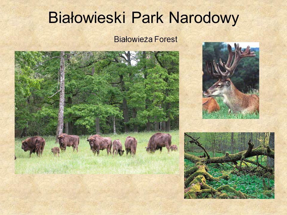 Białowieski Park Narodowy Białowieża Forest