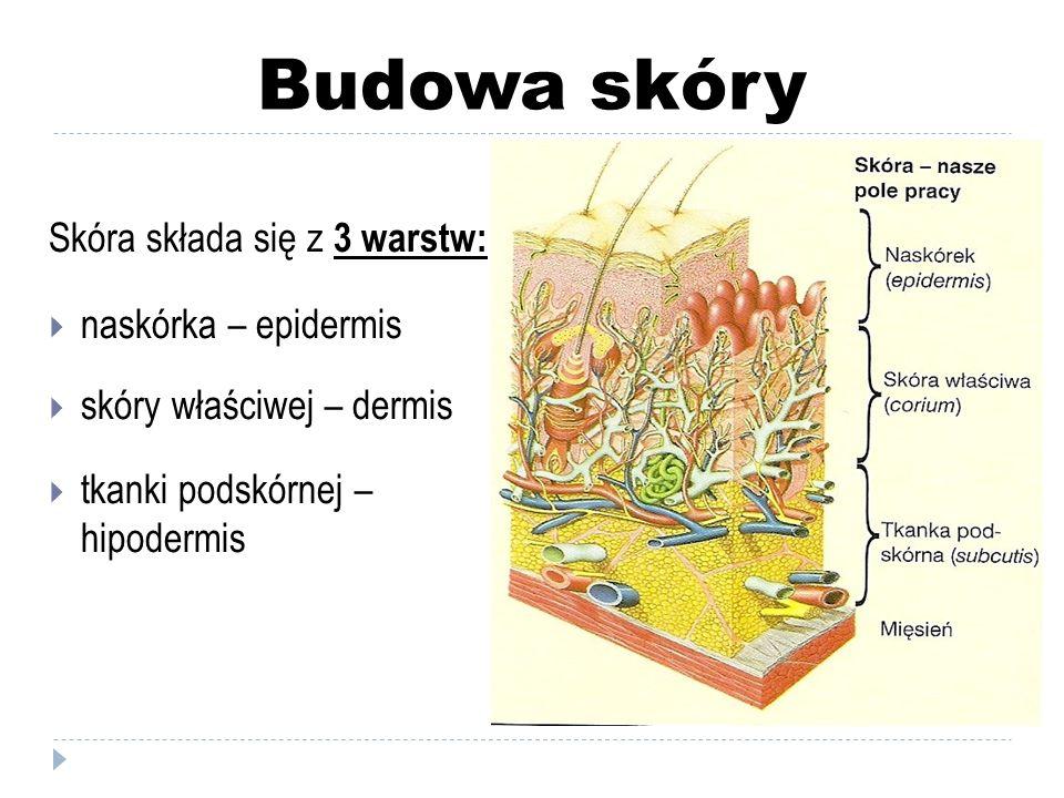 Budowa skóry Skóra składa się z 3 warstw:  naskórka – epidermis  skóry właściwej – dermis  tkanki podskórnej – hipodermis
