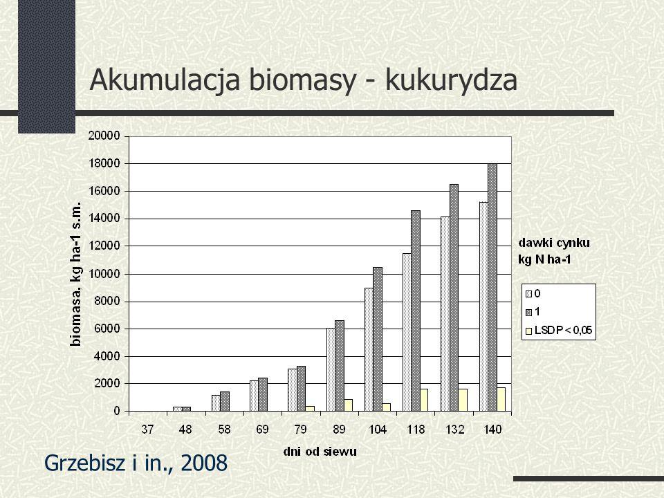 Akumulacja biomasy - kukurydza Grzebisz i in., 2008