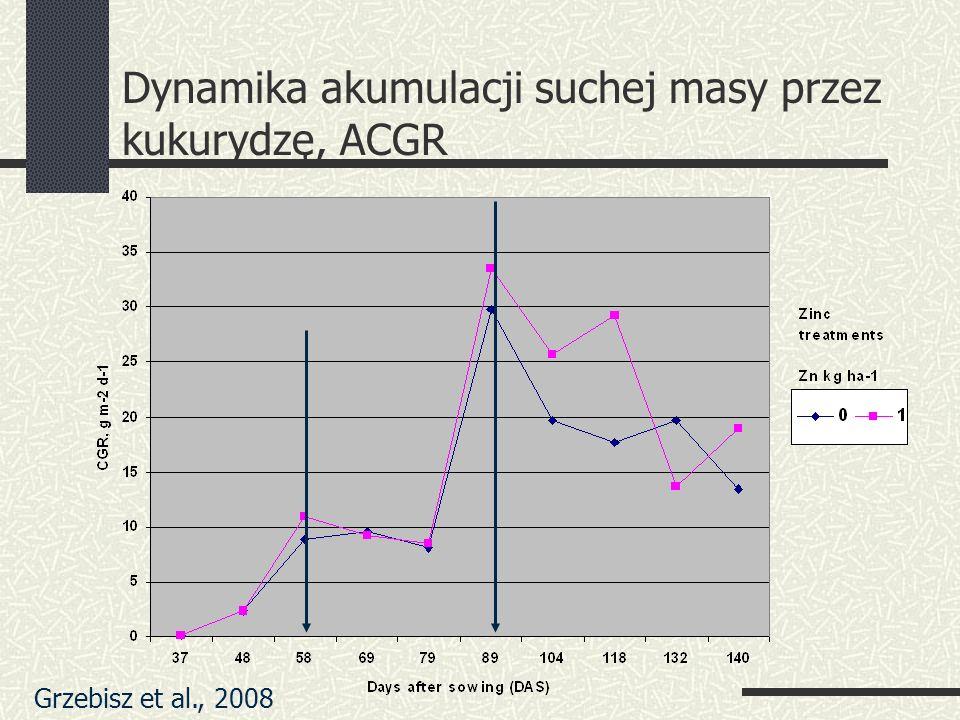 Dynamika akumulacji suchej masy przez kukurydzę, ACGR Grzebisz et al., 2008