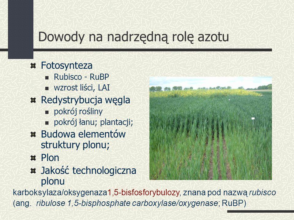 Dowody na nadrzędną rolę azotu Fotosynteza Rubisco - RuBP wzrost liści, LAI Redystrybucja węgla pokrój rośliny pokrój łanu; plantacji; Budowa elementów struktury plonu; Plon Jakość technologiczna plonu karboksylaza/oksygenaza1,5-bisfosforybulozy, znana pod nazwą rubisco (ang.
