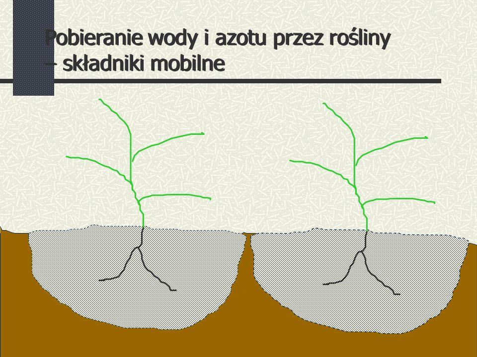 Pobieranie wody i azotu przez rośliny – składniki mobilne Pobieranie wody i azotu przez rośliny – składniki mobilne