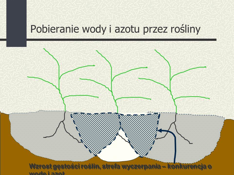 Wzrost gęstości roślin, strefa wyczerpania – konkurencja o wodę i azot Pobieranie wody i azotu przez rośliny