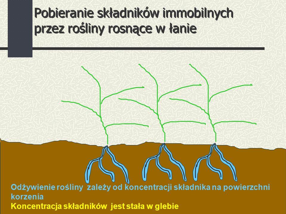 Pobieranie składników immobilnych przez rośliny rosnące w łanie Odżywienie rośliny zależy od koncentracji składnika na powierzchni korzenia Koncentracja składników jest stała w glebie