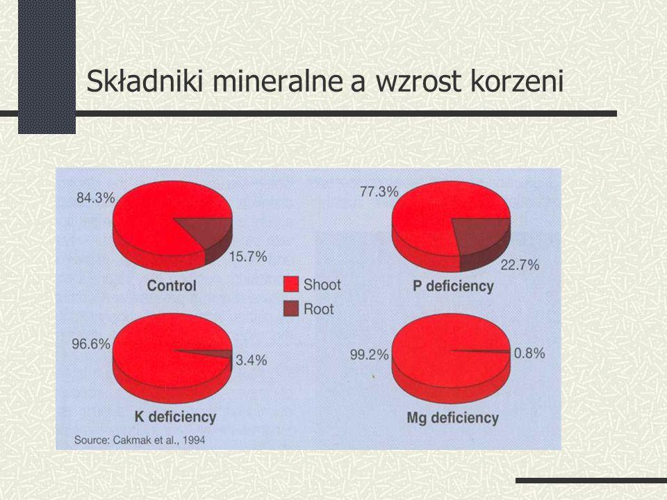 Składniki mineralne a wzrost korzeni