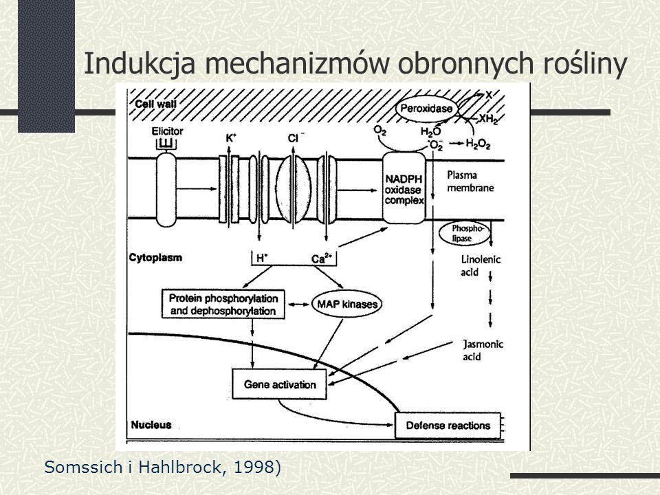 Indukcja mechanizmów obronnych rośliny Somssich i Hahlbrock, 1998)