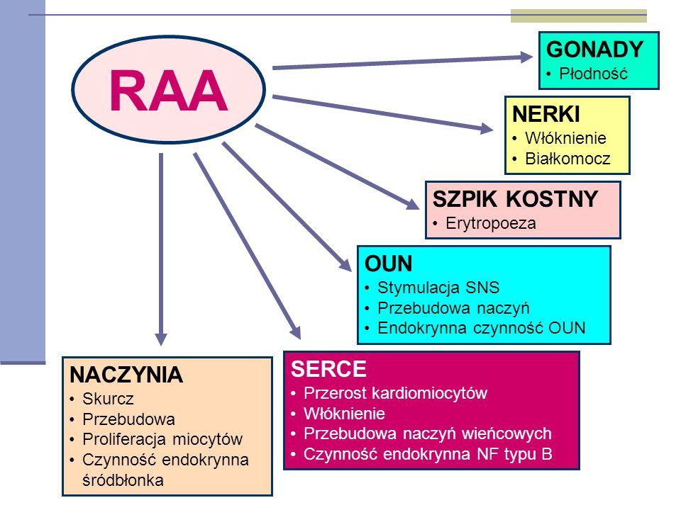 RAA NACZYNIA Skurcz Przebudowa Proliferacja miocytów Czynność endokrynna śródbłonka SERCE Przerost kardiomiocytów Włóknienie Przebudowa naczyń wieńcowych Czynność endokrynna NF typu B NERKI Włóknienie Białkomocz OUN Stymulacja SNS Przebudowa naczyń Endokrynna czynność OUN GONADY Płodność SZPIK KOSTNY Erytropoeza