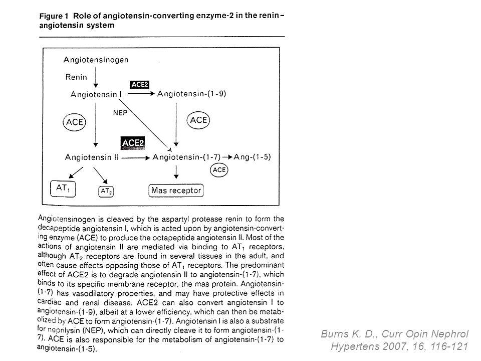 Burns K. D., Curr Opin Nephrol Hypertens 2007, 16, 116-121