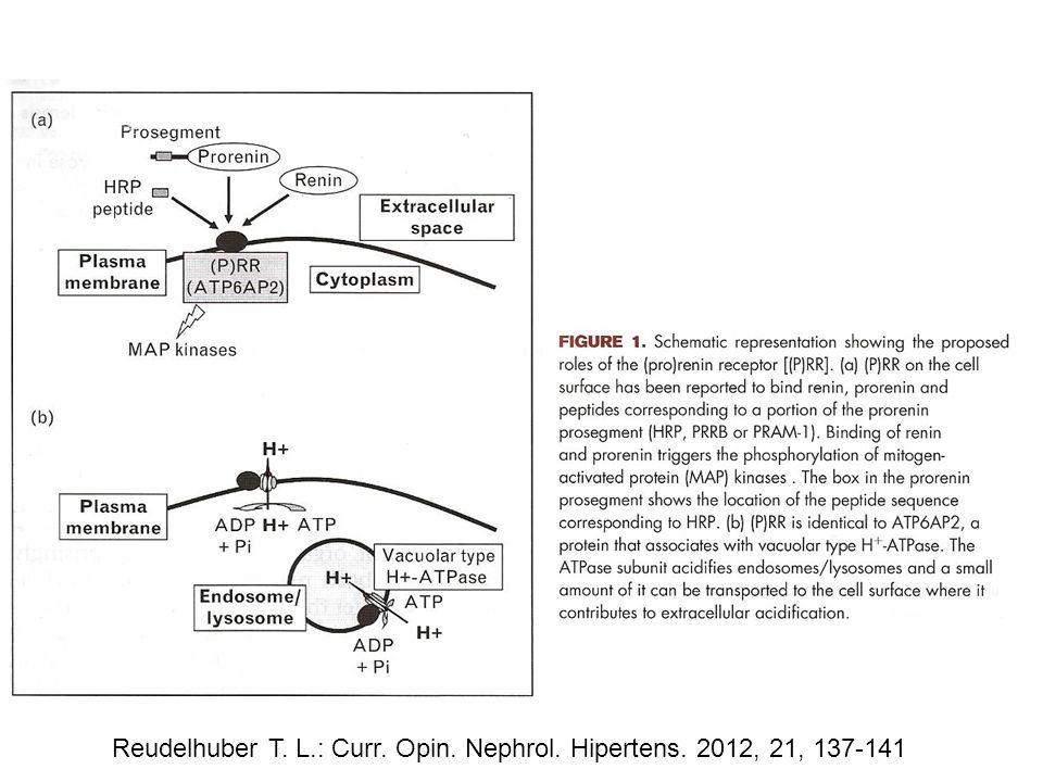 Reudelhuber T. L.: Curr. Opin. Nephrol. Hipertens. 2012, 21, 137-141