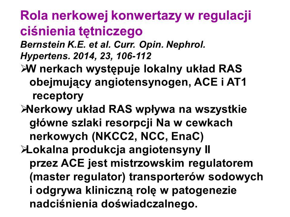 Rola nerkowej konwertazy w regulacji ciśnienia tętniczego Bernstein K.E. et al. Curr. Opin. Nephrol. Hypertens. 2014, 23, 106-112  W nerkach występuj