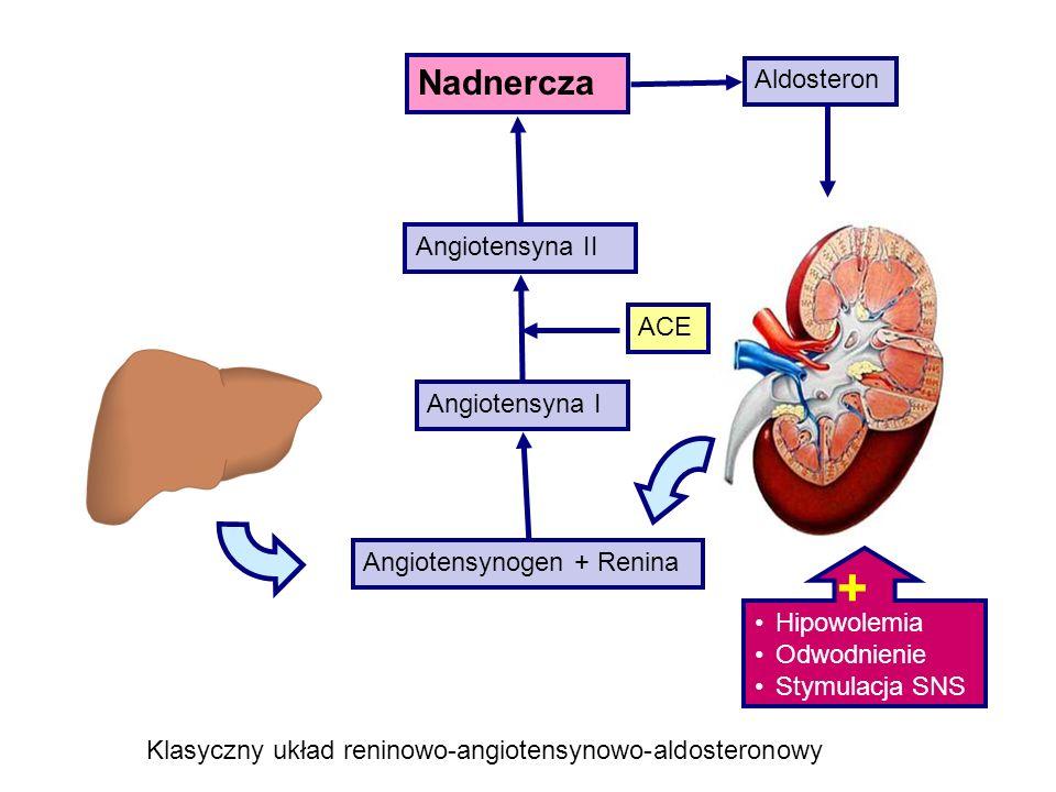 Angiotensyna I Angiotensyna II Angiotensynogen + Renina ACE Aldosteron Hipowolemia Odwodnienie Stymulacja SNS Klasyczny układ reninowo-angiotensynowo-