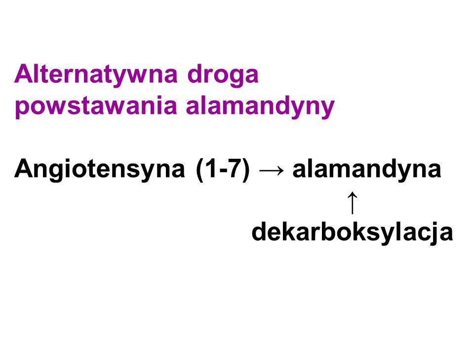 Alternatywna droga powstawania alamandyny Angiotensyna (1-7) → alamandyna ↑ dekarboksylacja