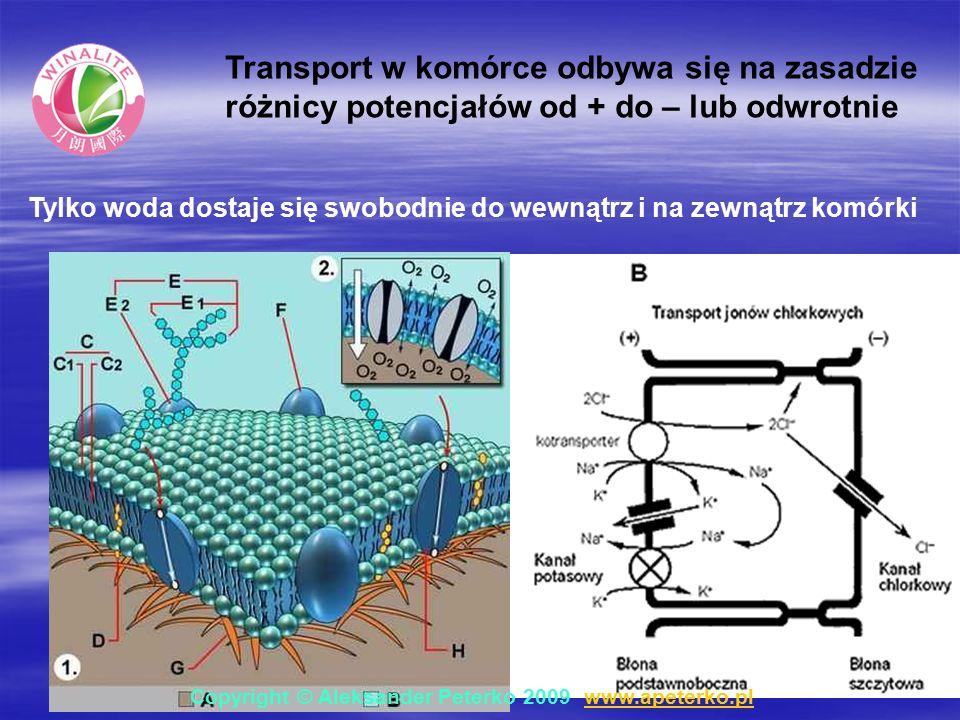 Transport w komórce odbywa się na zasadzie różnicy potencjałów od + do – lub odwrotnie Tylko woda dostaje się swobodnie do wewnątrz i na zewnątrz komórki Copyright © Aleksander Peterko 2009 www.apeterko.pl www.apeterko.pl