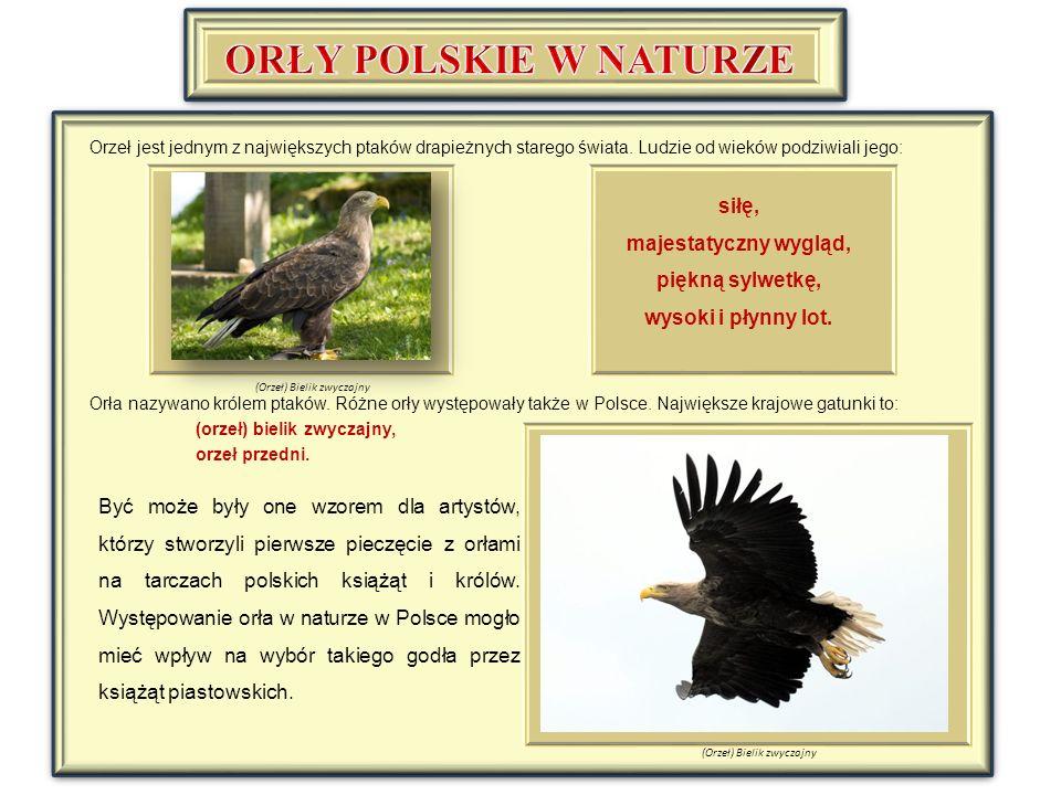 Orzeł jest jednym z największych ptaków drapieżnych starego świata.